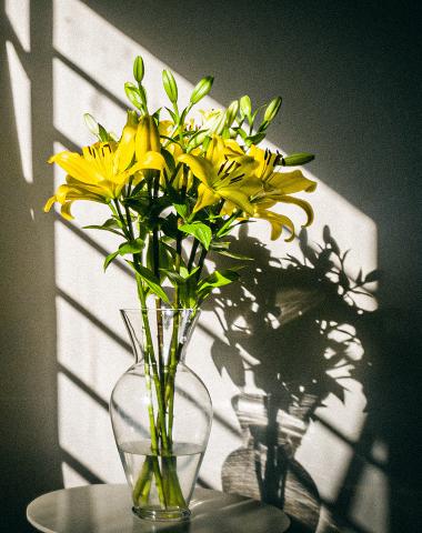 flor sob sombra